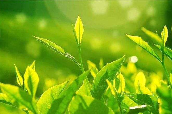 茶叶CMA/CNAS检测报告-茶叶质检报告中心插图